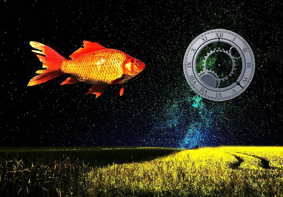 goldfish-distraction